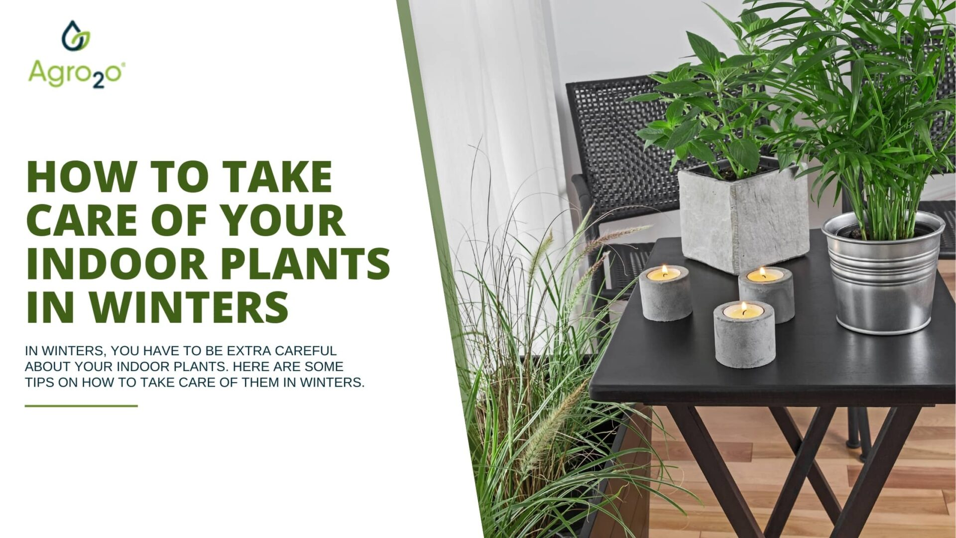 How To Take Care Of Your Indoor Plants In Winter